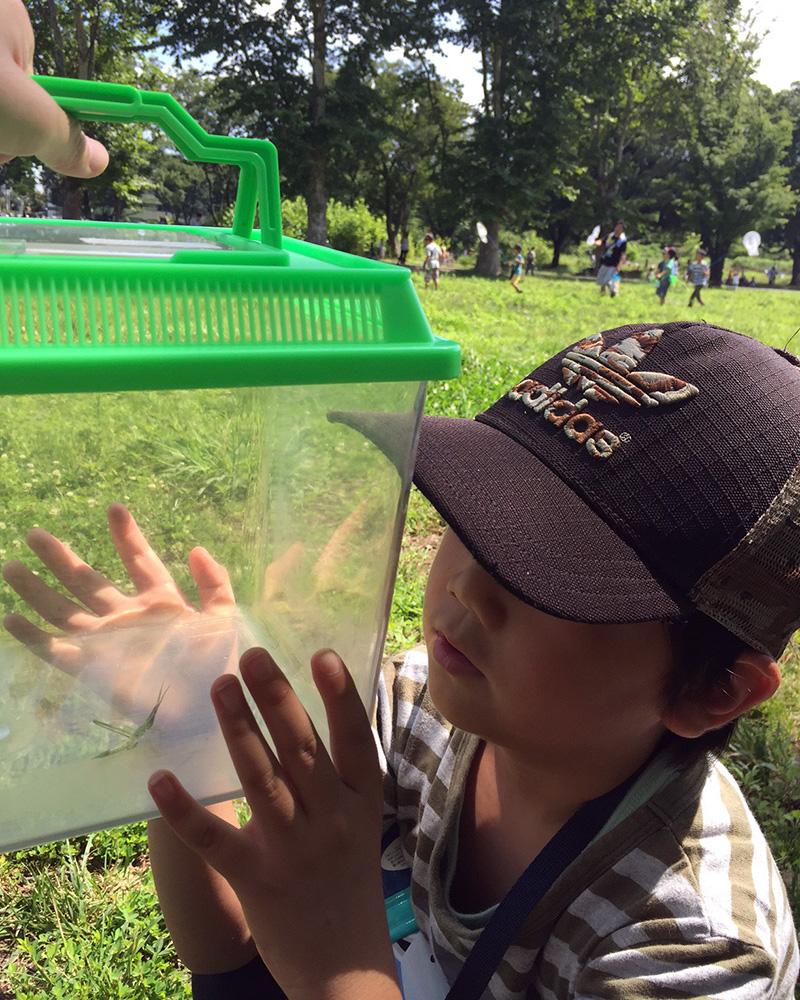この夏は息子と地域の虫取りイベントに参加したり、学童ではまったプラバンやアイロンビーズをやったりしました